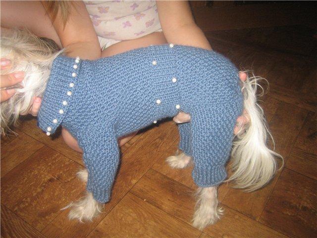 Как связать штанишки для маленькой собачки видео